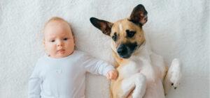 Bebé e cão